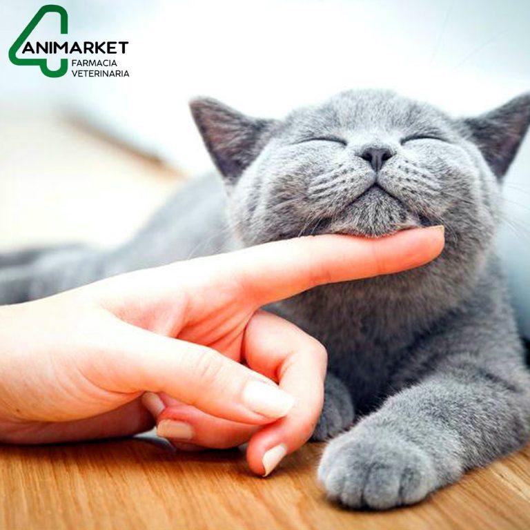 Lee más sobre el artículo ¿Porqué debes acariciar a tu gato?